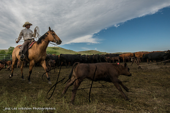catch Cowboys working and playing. Cowboy Cowboy Photo Cowboy, Cowboy and Cowgirl photographs of western ranches working with horses and cattle by western cowboy photographer Jess Lee. Photographing ranches big and small in Wyoming,Montana,Idaho,Oregon,Colorado,Nevada,Arizona,Utah,New Mexico.