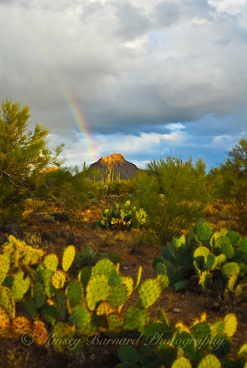 &quot;DESERT RAINBOW&quot;<br />