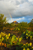 """DESERT RAINBOW""<br />