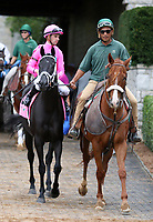 LEXINGTON, KY - October 7, 2017.  #8 Hogy and jockey Florent Geroux before finishing 2nd in the Woodford presented by Keeneland Select Grade 2 $200,000 at Keeneland Race Course.  Lexington, Kentucky. (Photo by Candice Chavez/Eclipse Sportswire/Getty Images)