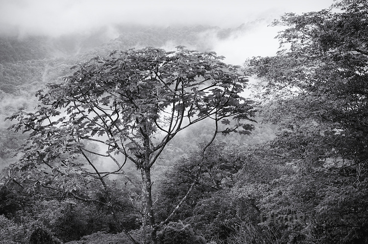 Black & white fine art image Costa Rica forest