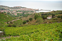 A view over the vineyards and village of Collioure on the Mediterranean, Languedoc-Roussillon, France