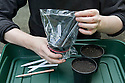 Sowing melon seeds 3 of 4. Put a clear plastic bag over each pot and secure it with an elastic band.