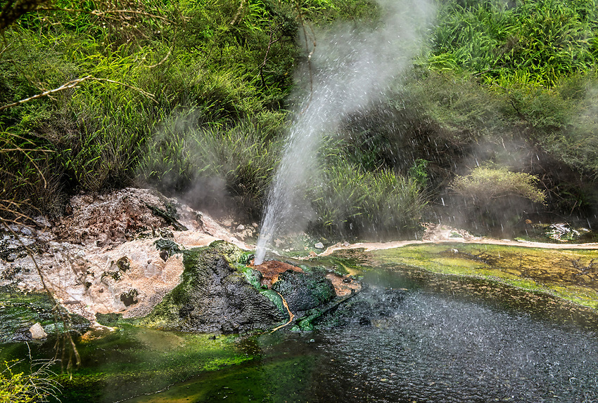 Small geyser at the side of a hot stream in the Waimangu Volcanic Valley
