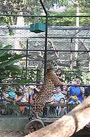 MEDELLÍN - COLOMBIA, 10-01-2015. Un Jaguar de alcanzar una caja de regalo que contiene su comida preferida. Este fue el evento con el cual el Zoológico de Medellín quizó celebrar la llegada de los reyes magos./ A jaguar tries to achieve a gift box containing his favorite food. This was the event which Medellín Zoo Did you celebrate the arrival of the Three Kings. Photo: VizzorImage/Luis Rios/STR