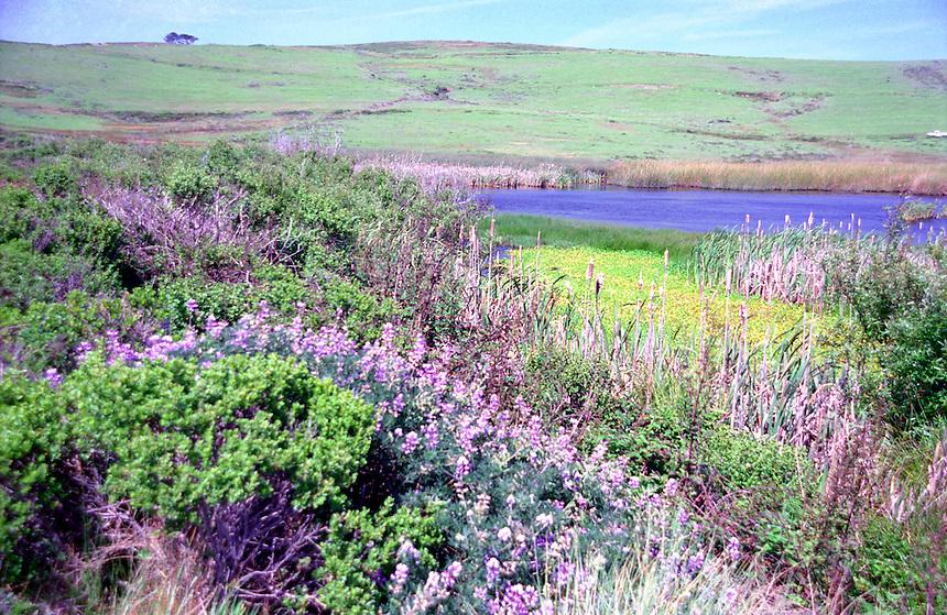 Flowered hillsides outside Bodega Bay, CA