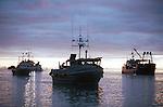 Gill netting salmon fishermen in Naknek, Alaska on Alaska's Bristol Bay in the summer of 2000.