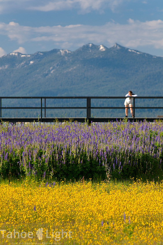 Taking in the views along the west shore of Lake Tahoe with lupin fields and kayak