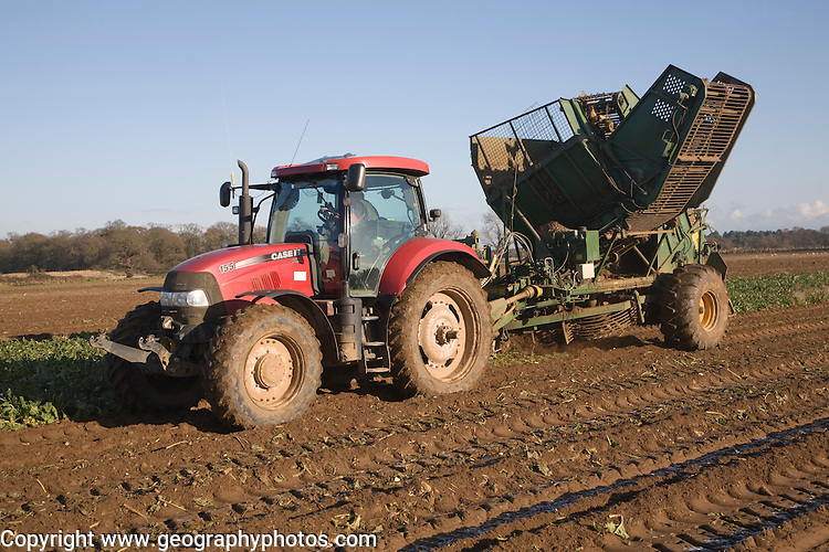 Thyregod sugar beet harvester drawn by tractor harvesting field, Shottisham, Suffolk, England