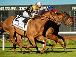February 8, 2020: #3, Admiralty Pier and Samy Camacho get the bob at the wire and survive the inquiry in a near triple dead heat for Trainer Barbara Minshall and Live Oak Plantation in the Grade III Tampa Bay Stakes on February 8, 2020 in Tampa, FL. (Photo by Carson Dennis/Eclipse Sportswire/CSM)