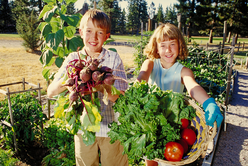 Boy and girl (brother and sister) gathering vegetables - including beets, lettuce, and tomatoes - in outdoor home garden, California. California.