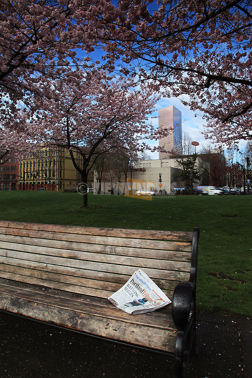 Park bench in Portland's Tom McCall Waterfront Park during Spring cherry blossoms.