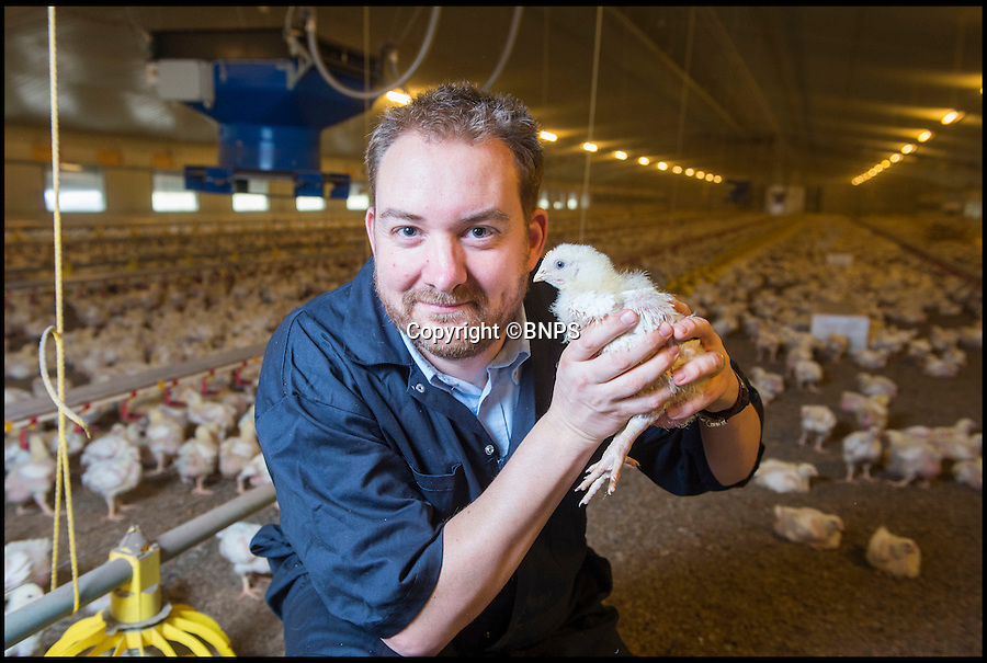 BNPS.co.uk (01202 558833)<br /> Pic: PhilYeomans/BNPS<br /> <br /> Look who's squawking... Farm Director Edward Gregg can now understand 11 different chicken sounds.<br /> <br /> Farmer's are getting in touch with their inner Dr Dolittle thanks to new technology that let's chickens reveal their inner thoughts.<br /> <br /> They can now understand the clucks and squawks of their flocks to know if their feathers are ruffled by heat or cold, if they are hungry or even sick.<br /> <br /> Scientists have been able to identify 11 different sounds the hens make to communicate and use them to make their environment better.<br /> <br /> Applied Poultry near Chesterfield in Derbyshire, are the only British farm taking part in a project run by Leuven University in Belgium.