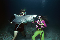 Divers remove long-line fishing hook from Tiger Shark, Galeocerdo cuvier, Bahamas, Caribbean Sea.