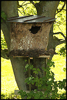 BNPS.co.uk (01202 558833)<br /> Pic: RobertFuller/BNPS<br /> <br /> The bird box is in Mr Fuller's garden.<br /> <br /> Brawling birds in nest ding dong...<br /> <br /> The gloves were off and the feathers were flying as these two birds of prey went wing-to-wing over a nesting box.<br /> <br /> This incredible footage shows a kestrel and a barn owl fighting it out for the prime spot to lay their eggs.<br /> <br /> The pair circle their boxing ring, staring each other down before attacking with talons and beaks in the hour-long stand-off.<br /> <br /> The bird brawl was captured by wildlife photographer Robert Fuller on a nestcam he had set up inside a 13ft-high old elm tree stump.
