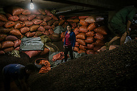 Nguyen Thi Hue, the owner of Hue Hoan, a black cardamom (Thao Qua) dealer's shop, checks her stores of cardamom which are kept in the basment of her shop. She sells to regional dealers but also to the Chinese phamarceutical industry.