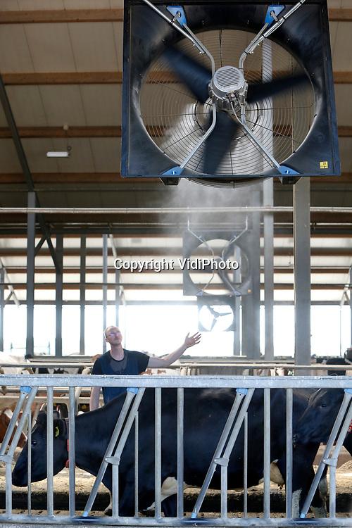 Foto: VidiPhoto<br /> <br /> HERVELD – Melkveehouder Sjon Peek uit Herveld in de Betuwe controleert woensdag de werking van zijn nieuwe stalventilatoren. Om zijn 250 melkkoeien ook tijdens de hitte ultiem comfort te kunnen bieden, heeft hij twee maanden geleden achttien enorme ventilatoren geplaatst. Net op tijd, want de levertijd bedraagt nu twaalf maanden. Koeien willen met deze hitte niet naar buiten, maar ook in de open stal kan door de warme koeienlichamen en de kracht van de zon, de temperatuur binnen flink oplopen. Vandaar dat de propellors -met een vermogen van 580 watt per stuk- ook nog eens voorzien zijn van een watervernevelaar. Niet alleen wordt zo de warmte afgevoerd, maar daalt de temperatuur in de stal met ongeveer vijf graden. Om toch voor voldoende weidegang te zorgen, mogen de koeien van melkveebedrijf Peek en Fokker tijdens (te) warme dagen 's nachts naar buiten. Volgens Peek hebben koeien een hekel aan zon en voelen ze zich het meest comfortabel bij een temperatuur van 4 graden Celsius.
