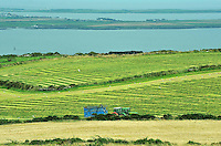 Forage harvesting at Cregneash, Isle of Man....Copyright..John Eveson, Dinkling Green Farm, Whitewell, Clitheroe, Lancashire. BB7 3BN.01995 61280. 07973 482705.j.r.eveson@btinternet.com.www.johneveson.com