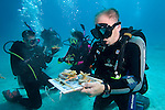 College students helping to gather young Staghorn Coral for relocation to a damaged reef off Key Largo, Florida Keys, USA Editorial Use only, NO sales to U.S. Dive magazines
