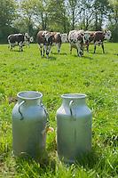 France, Calvados (14), Pays d'Auge, Mery-Corbon, Ferme des Patis , bidons de lait et vaches normandes // France, Calvados, Pays d'Auge, Mery Corbon, Ferme des Patis, milk can and normande cows