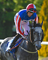 Vincenzo Coccotti ridden by Thomas Greatrex goes down to the start of The Sharp's Doom Bar Handicap during Evening Racing at Salisbury Racecourse on 25th May 2019