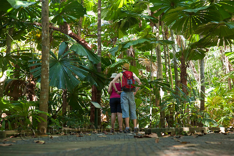 Hikers walk through a licuala palm forest on the Dubuji Boardwalk.  Capte Tribulation, Daintree National Park, Queensland, Australia