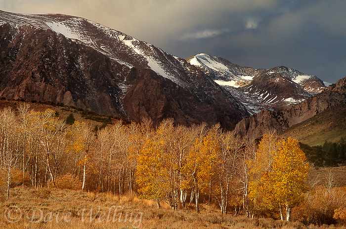 742900128 storm clouds form over fall colored aspens populus tremuloides and the mountains in the eastern sierras of central california