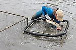 Kitty Barnett Transfering Leopard Shark