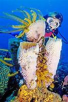 WSB-Dominica