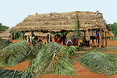 A-Ukre Village, Brazil. Men of the village working together to build an new palm thatched house; Kayapo tribe.