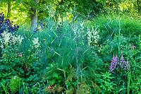France, Loir-et-Cher (41), Cheverny, château de Cheverny, le Jardin des apprentis, massif avec fenouil (Foeniculum vulgare) astilbes, reine-des-prés (Filipendula ulmaria)...