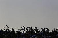 SAO PAULO, SP, 14.09.2014 - CAMP. BRASILEIRO - SAO PAULO - CRUZEIRO - Torcedores do Sao Paulo durante partida contra o Cruzeiro jogo valido pela 21 rodada do Campeonato Brasileiro no Estadio Cicero Pompeu de Toledo no Morumbi regiao sul de Sao Paulo neste domingo, 14. (Foto: William Volcov / Brazil Photo Press).