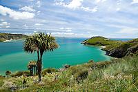 The Albatross Colony at Tairoa Head, Otago Harbour