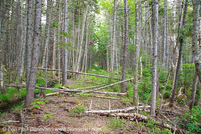 Pemigewasset Wilderness - Remnants of the East Branch & Lincoln Railroad bed in the area of Stillwater Junction in Lincoln, New Hampshire. This section of railroad led to Camp 19. The EB&L was a logging railroad in operation from 1893-1948.