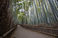 Japanese Forests