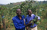 Technicians of the Ugandan Ministry of Agriculture showing results of passion fruit production