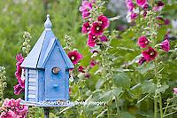 01324-01402 House Wren (Troglodytes aedon) at blue nest box near Hollyhocks (Alcea rosea) Marion Co. ,  IL