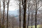 Europa, DEU, Deutschland, Nordrhein Westfalen, NRW, Rheinland, Siebengebirge, Koenigswinter, Wald, Buchenwald, Kategorien und Themen, Natur, Umwelt, Landschaft, Jahreszeiten, Stimmungen, Landschaftsfotografie, Landschaften, Landschaftsphoto, Landschaftsphotographie, <br /> <br /> [Fuer die Nutzung gelten die jeweils gueltigen Allgemeinen Liefer-und Geschaeftsbedingungen. Nutzung nur gegen Verwendungsmeldung und Nachweis. Download der AGB unter http://www.image-box.com oder werden auf Anfrage zugesendet. Freigabe ist vorher erforderlich. Jede Nutzung des Fotos ist honorarpflichtig gemaess derzeit gueltiger MFM Liste - Kontakt, Uwe Schmid-Fotografie, Duisburg, Tel. (+49).2065.677997, archiv@image-box.com, www.image-box.com]