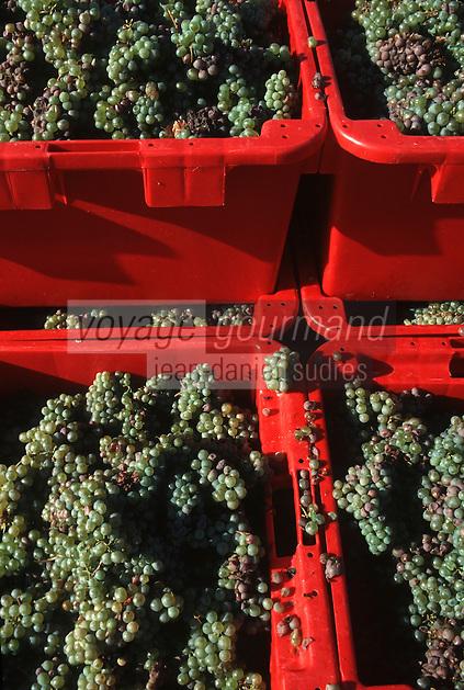 Europe/France/Centre/37/Indre-et-Loire/Env de Vouvray: Vendanges - Détail des grappes de raisins blancs en cagettes