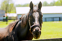 GEORGETOWN, KENTUCKY, MAY 06: War Emblem at the 14th Annual Fundraiser at Old Friends Farm on May 6, 2018 in Georetown, Kentucky. (Photo by Sue Kawczynski/Eclipse Sportswire/Getty Images)
