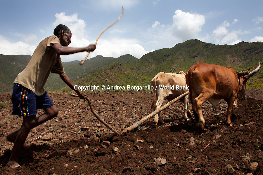 Ethiopia, Tigray region, Rayazebo District. Man working in a field part of the World Bank funded Sustainable Land Management Program.