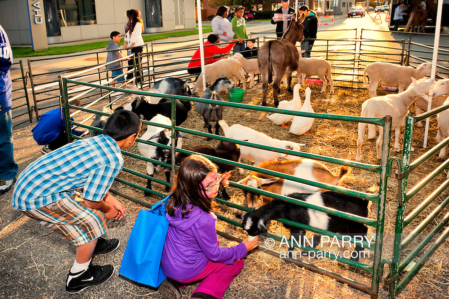 Petting Zoo at dusk - young children with farmyard small animals such as goats, ducks, sheep, donkey -  in middle of intersection during Merrick Street Fair in Merrick, New York, USA, on October 23, 2011