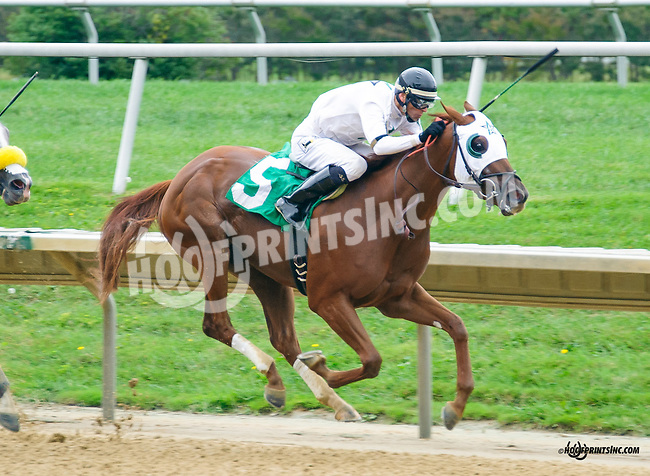 Social Butterfly winning at Delaware Park on 9/30/15
