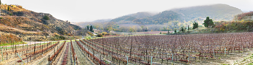 near Magrie . Frost. Limoux. Languedoc. An early winter morning with mist still laying low and sunshine glowing golden. France. Europe. Vineyard. Mountains in the background.