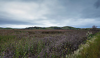 The Coyote Hills, the Little Hills, for which the Coyote Hills Regional Park is named.   A panoramic composite along San Francisco Bay.