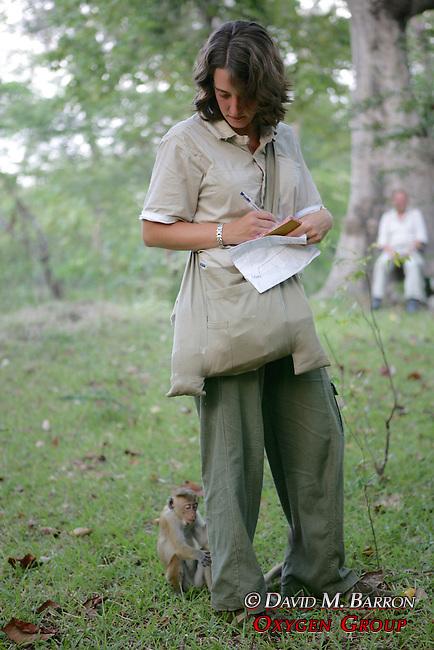 Rachel Hughes Observing Toque Macaque
