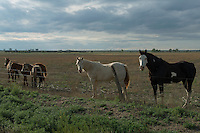 Horses in Crowley County, Colorado, Wednesday, May 18, 2016. Crowley County, once a thriving agricultural community with over 50,000 acres of farm land, sold it's water rights the City of Aurora for municipal use and now farms a little more than 5,000 acres of land. The result has seen dried and dead farm land and abandoned homesteads. Crowley County represents a dire look at how mismanaged water rights can have devastating effects on an already drought prone region.<br /> Photo by Matt Nager