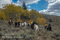 Wyoming Cowboy Cowboys working and playing. Cowboy Cowboy Photo Cowboy, Cowboy and Cowgirl photographs of western ranches working with horses and cattle by western cowboy photographer Jess Lee. Photographing ranches big and small in Wyoming,Montana,Idaho,Oregon,Colorado,Nevada,Arizona,Utah,New Mexico.