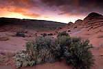 Sunset and clouds over flora plants and sandstone in the desert, Paria Vermilion Cliffs Wilderness, Arizona Utah