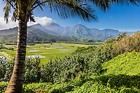 The view of taro fields and mountains from a scenic viewpoint at Hanalei, Kaua'i.
